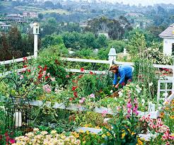 Types Of Vegetables To Grow In A Garden - tips for growing an organic vegetable garden