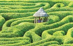 garden maze and tree house in phuket bemyguest