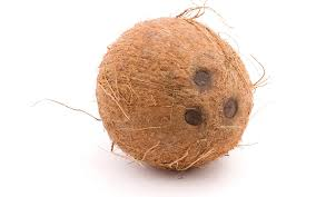 evolution why does a coconut have exactly three