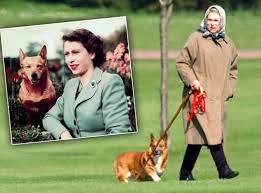 queen elizabeth dog queen elizabeth s last corgi dies and staff is secretly happy