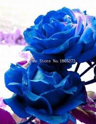 compare prices on single purple rose online shopping buy low