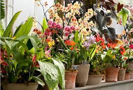 Botanical Garden Orchid Show New York Botanical Garden Orchid Show Designer Daniel Ost The