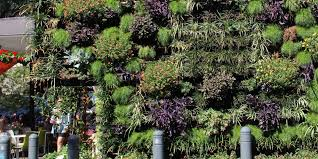 vertical gardens in the garden with kim syrus channel 9