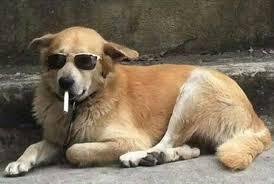 Dog With Glasses Meme - john bowring on twitter good boy i ain t heard that name in