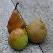 gourmet pears how to keep your pears from turning brown frog hollow farm