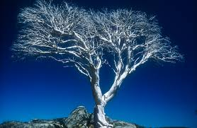 white tree coral spence corio bay club photography club geelong