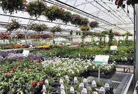 me best ideas about rock garden plant and tree nursery nurseries