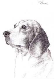 four drawings of dogs in ballpoint pen u2013 pet portraits by thomas