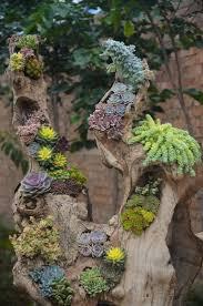 295 best succulents images on pinterest plants succulent