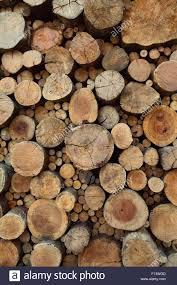 Teak Wood Natural Background Old Teak Wood Stumps With Cracks And Annual