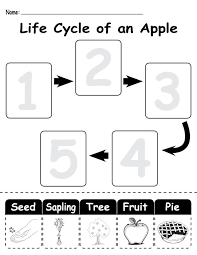 apple life cycle worksheet free worksheets library download and