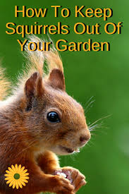 how to keep squirrels out of the garden backyard garden lover