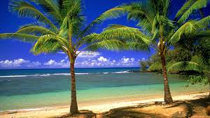 tropical island paradise wallpaper wallpapersafari tropical paradise art prints art wall and posters wall murals buy a