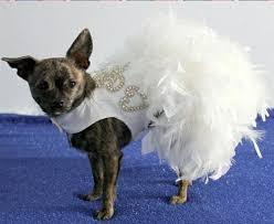 dog wedding dress dog boutique designer dog clothing and accessories for your dog