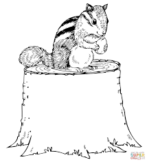chipmunk eating nut on tree stump coloring page free printable
