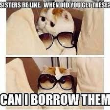 Funny Sister Meme - sister meme kappit