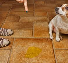 Remove Cat Urine From Sofa Home Remedies For Dog Urine On Furniture