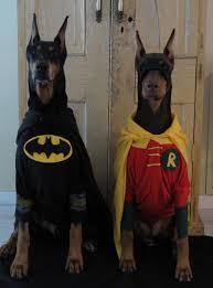 Batman Costume Halloween Batman Robin Doberman Nino U0027s Halloween Costumes