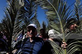 catholic worshippers take part in the traditional palm sunday