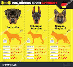 types of dogs dogs breed vector info graphics types stock vector 438959230
