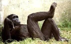 القرود انواعها  ونبذه عنها والصور Images?q=tbn:ANd9GcQHvp1D-R6Bw627N_Si2ecjHKSfxph60weiFXKTnyIZbK7BR-IReQ