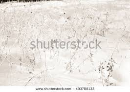 vector texture background winter frosty pattern stock vector