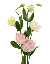 lisianthus flower lisianthus flowers we flower style magazine