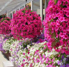 amenager balcon pas cher décorer son balcon avec des plantes conseils et astuces