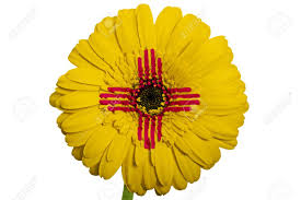 Flag Flower Gerbera Daisy Flower In Colors Flag Of Us State Of New Mexico