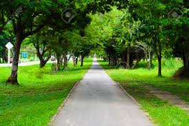 walkway park and trees for outdoor background stock photo picture