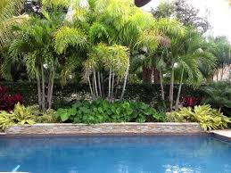 creating a tropical oasis with limited space can be challenging