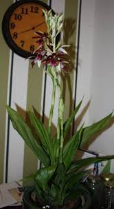 fast growing indoor houseplants wearefound home design