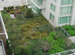Urban Wall Garden - green roofs and green wall gardening