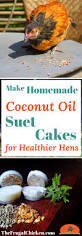 homemade suet cakes for chickens take less than 15 minutes to