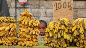 how the global banana industry is killing the world u0027s favorite