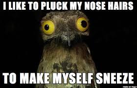 Potoo Bird Meme - weird stuff i do potoo know your meme