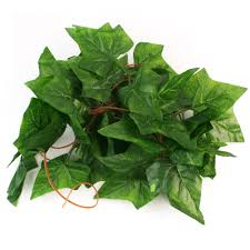 online buy wholesale evergreen ivy plants from china evergreen ivy