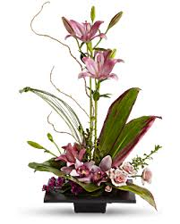 Tropical Plants Images - send a plant for any occasion teleflora