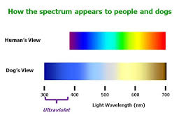 Visible Light Spectrum Wavelength Can Dogs See In Ultraviolet Psychology Today