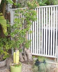 Backyard Privacy Screens by 84 Best Garden Ideas For Privacy Screen Images On Pinterest