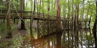 South Carolina national parks images Travel congaree national park raleigh and nyc wedding jpg