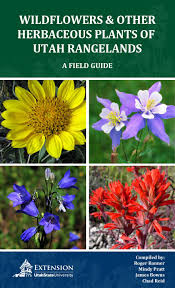 native alberta plants wildflowers and other herbaceous plants of utah rangelands by utah