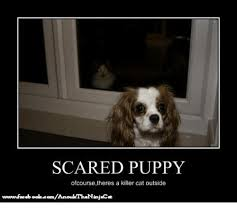 Scared Cat Meme - scared puppy ofcourse theres a killer cat outside cats meme on sizzle