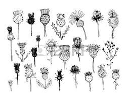 1 742 thistle stock vector illustration and royalty free thistle clipart