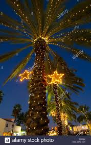 extraordinary palm tree lights stock photos