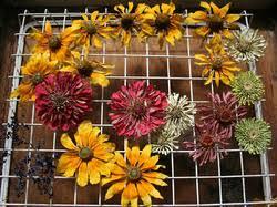 Dry Flowers Dried Flowers In Chennai Tamil Nadu India Indiamart