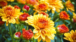 mums longer gardening advice england today