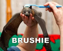 Bat Meme - brushie brushie brushie know your meme