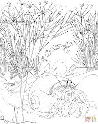 halloween crab coloring page free printable coloring pages