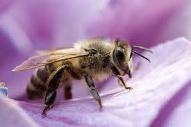 Bee Deterrent For Patio How To Get Rid Of Bees Safe Effective U0026 Practical Methods